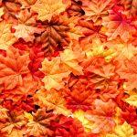 Autumn fabrics online at Calico Laine